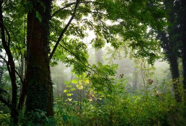 Foggy Morning VII by Aenea-Jones