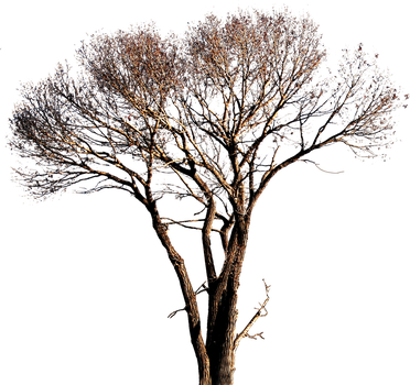 Tree-3 (PNG with transparency) by bupaje