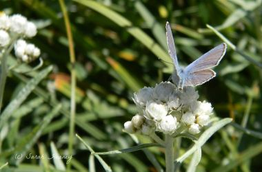 Butterfly by Lillith8810