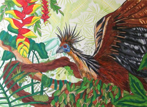 Hoatzin by twilight-amoeba