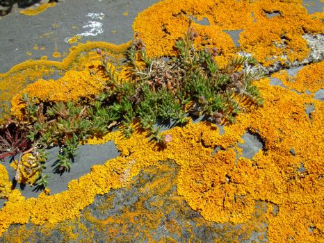 SMD Free Texture 15: Orange Lichen and Sea Plant by Spicy-Monster