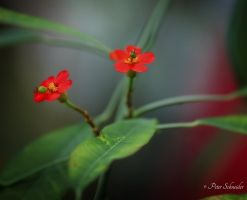 Twice red. by Phototubby