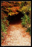 Tunnel of Nature by SimonArts