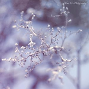 Frozen by alina0