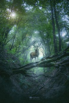 The King of the Woods by Zoroo