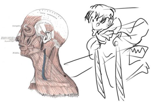 Human Anatomy - Head Profile Muscles by diddle0birb