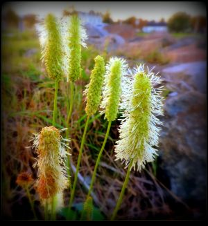 Wild plants close to the river. by JocelyneR