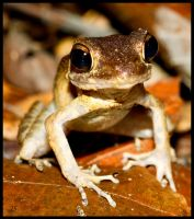 Frog by JS2010