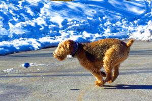 Catch the ball by Spid4
