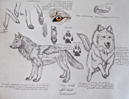 Study of a Wolf by Aestera