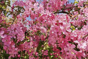 Pink spring by happybg