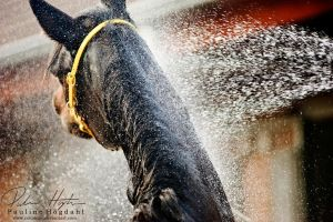Shower I by Colourize