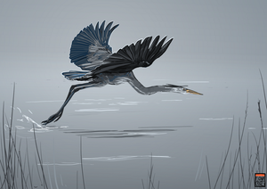 Heron - for HeronDreams by FionaCreates