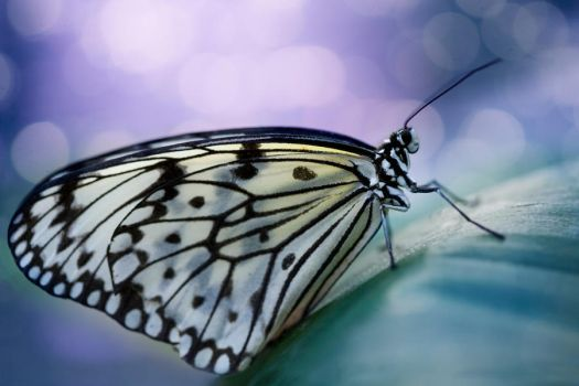 Paper kite butterfly by SarahharaS1
