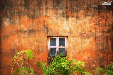 The Window by Arvind-R