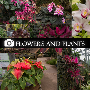 Flowers and plants FREE photo pack by RobertoGatto
