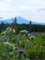 Mt. McLoughlin Stock by Carol-Moore
