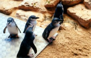 penguins by g-u-m-b-i