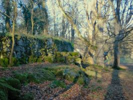 Marl Hall Woods 16-1-2012 by MakinMagic