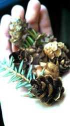 More baby pinecones by Anna1110