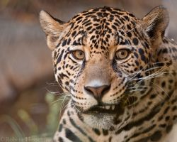 Reluctant Smile by robbobert