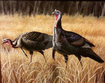 Two of A Kind, Wild Turkeys by pm3013