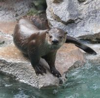 Tautphaus Zoo 27 Otter by Falln-Stock