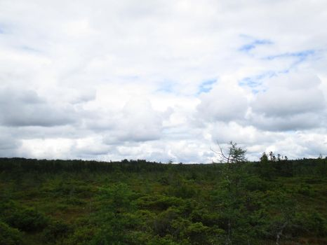 Clouds Over the Bog 5 by ChronosCat