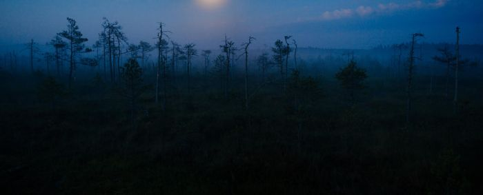 bog on a misty night by dzorma