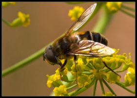 Hoover Fly by Wivelrod