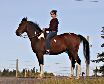 Bay Tobiano Arabian/Paint by EquineGhost