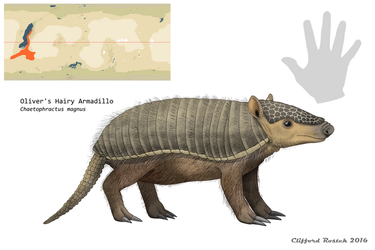 Nea - Oliver's Hairy Armadillo by Clawedfrog