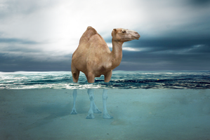 Sea camel by AgnethaArt