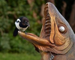 Magpie Fountain by Canislupuscorax