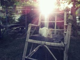 Cat and and a wood chair by bluemix2