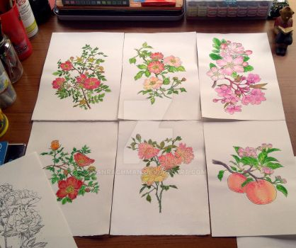 Flower Illustrations by Anrachman