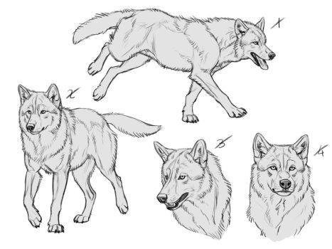 YCH Wolves 7 - SOLD by makangeni