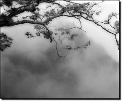 Wrapped in mist and mystery... by ansdesign