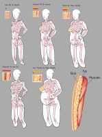 Obesity Map Anatomy Reference by ImoonArt