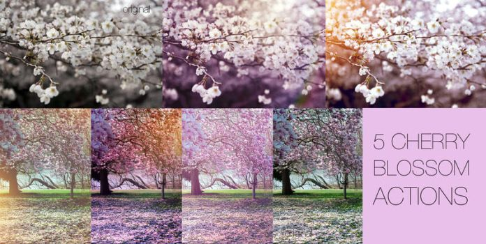 Cherry blossom actions by EliseEnchanted