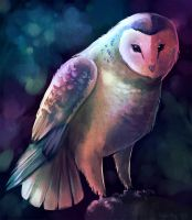 Owl by KaceyMeg
