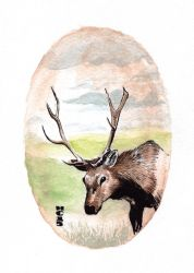 Watercolor Elk by hamdiggy