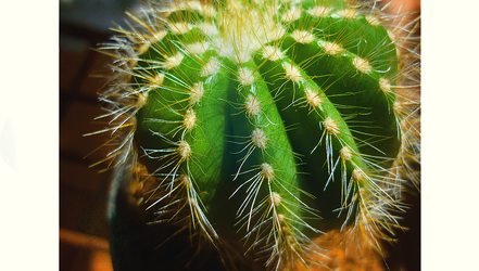 Cactus by ayuuaaa