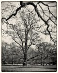 Just a Tree by HorstSchmier
