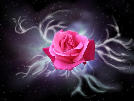 The Rose . . . Pink by FireOpal14