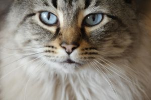 Cat Close Up by AustriaWorks