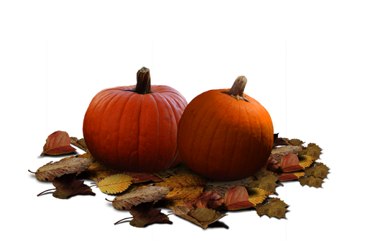 Pumpkin Patch Stock PNG by KarahRobinson-Art