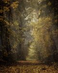 Premade Background FGM 226 by FairieGoodMother