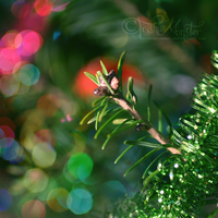 branches and bokeh by TrishaMonsterr