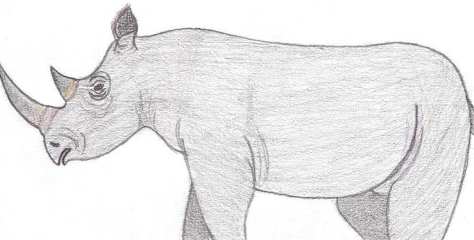 Black Rhino (Observational) by OtiTheComicsGuy